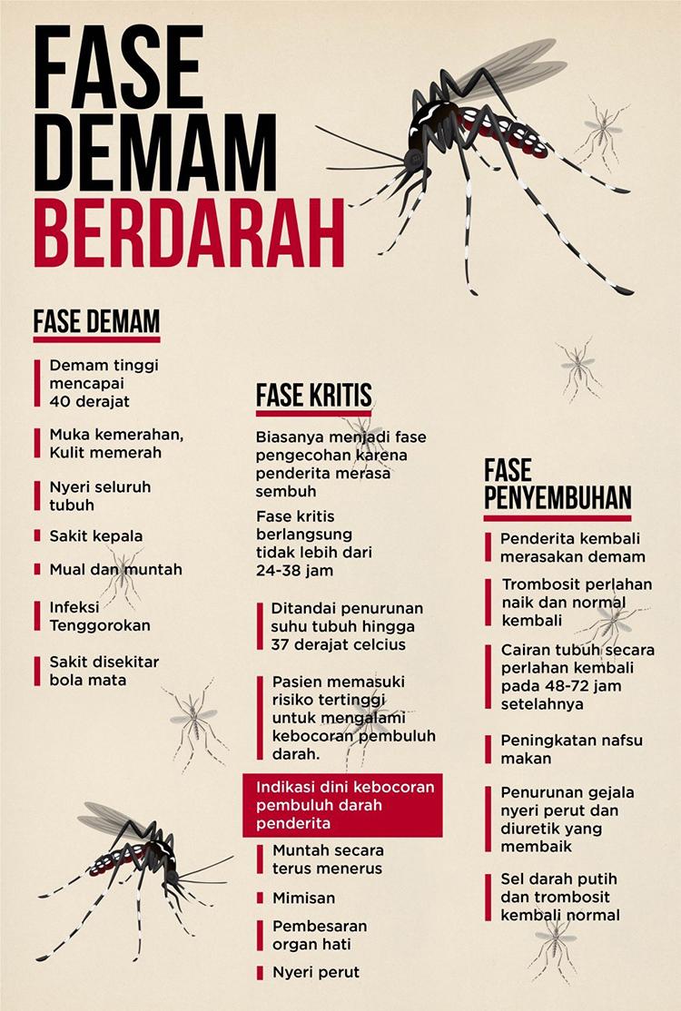 dbd info