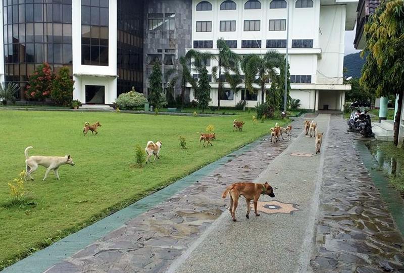 Karena Alasan Perikehewanan, Eliminasi Anjing Liar Sulit Dilakukan