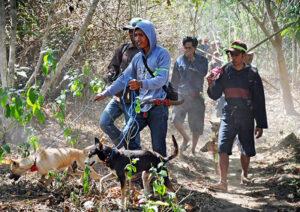 Sekongkang Jadi Satu-satunya Kecamatan di Sumbawa Barat yang Memiliki Penduduk Laki-laki Lebih Banyak daripada Perempuan - Tradisi Nganyang (Berburu Rusa) Masyarakat Sekongkang - Sumbawa Barat