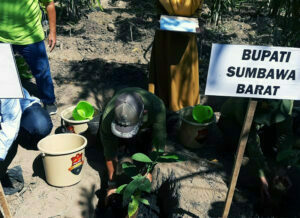 Lahan Kering di Sumbawa Barat Ditanami Kopi Robusta dan Rumput Biograss Agrinak - Bupati Sumbawa Barat